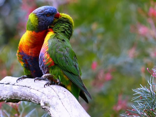 """<img src=""""http://2.bp.blogspot.com/-l5Ro-zrRS3s/Uq28IWrx7gI/AAAAAAAAFhc/KTlDgJmqbGo/s1600/sggs.jpg"""" alt=""""Birds wallpapers"""" />"""