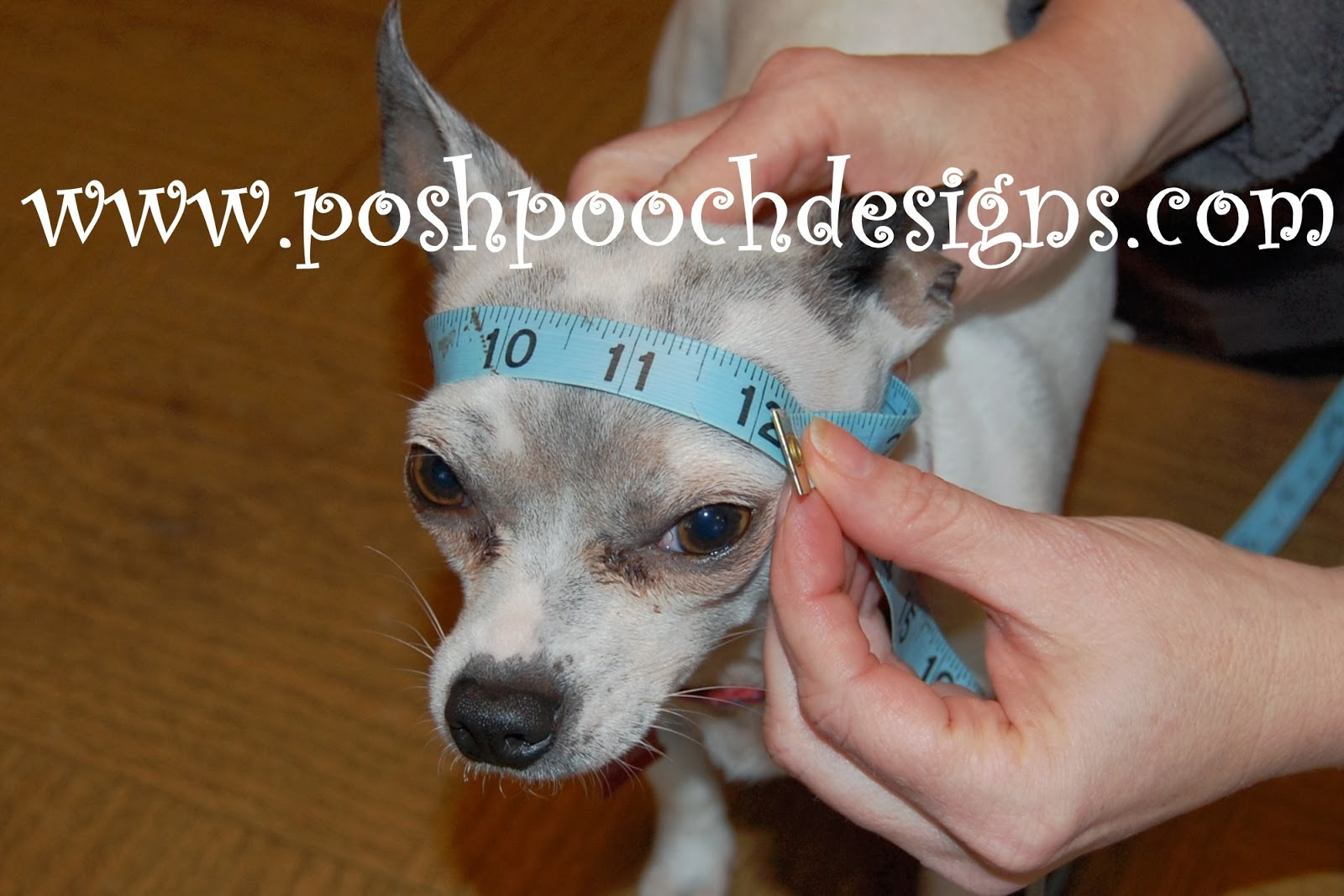 Crochet Pattern For Dog Hat With Ear Holes : Posh Pooch Designs Dog Clothes: Birthday Dog Hat Crochet ...