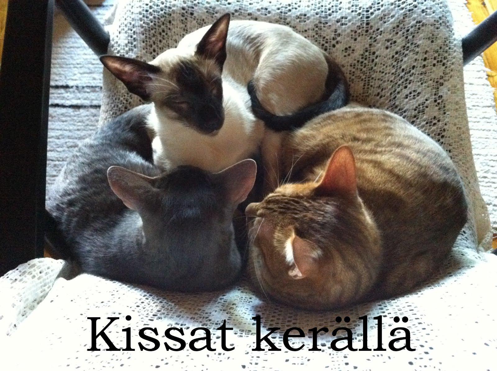 Kissat kerällä