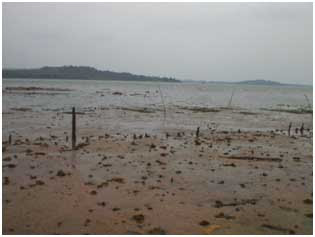 The occurrence of the process of Muddy Coast