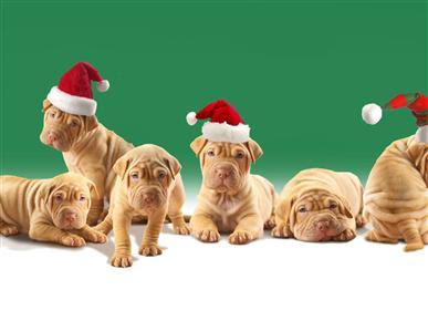 Los animales de Navidad