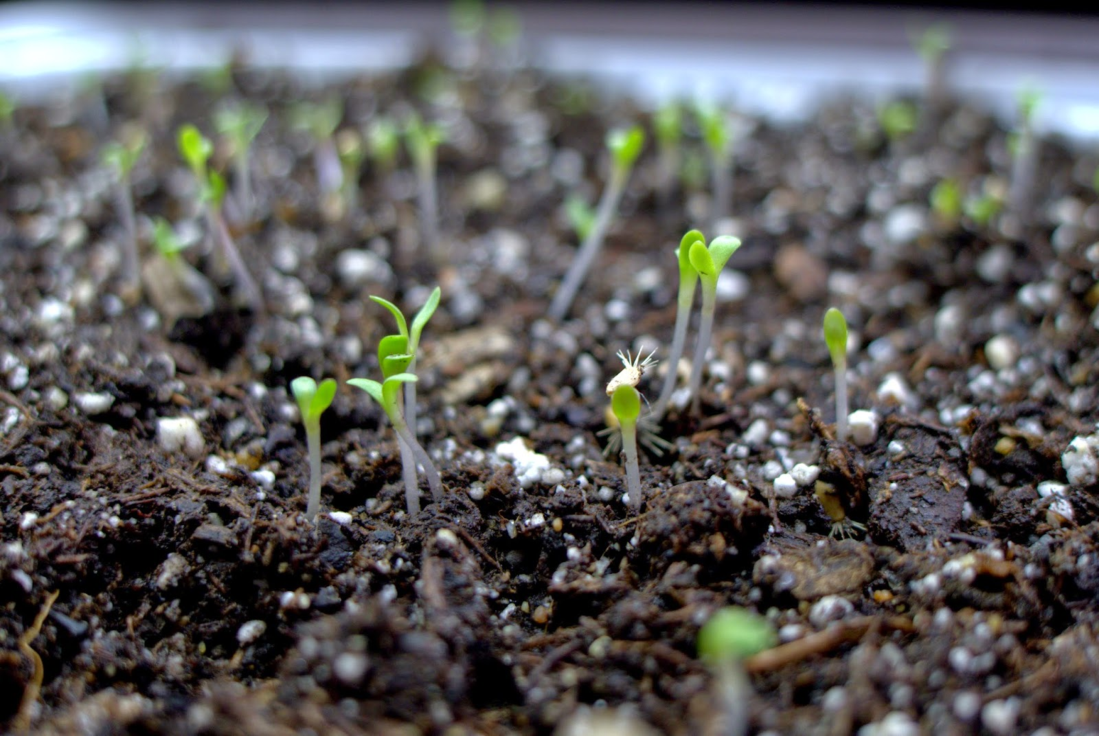 Less Noise More Green Germinating Seeds Indoors Some