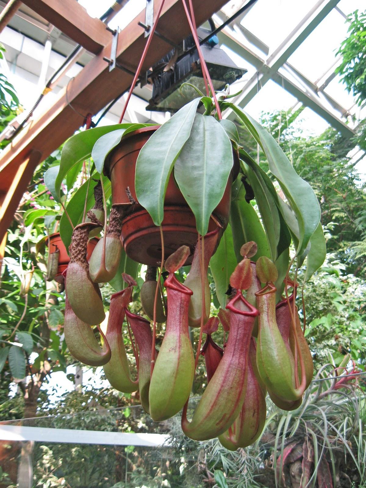 Decora interi plantas ex ticas for Plantas de interior exoticas