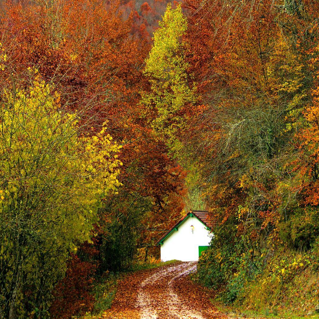 23. Autumn leaves