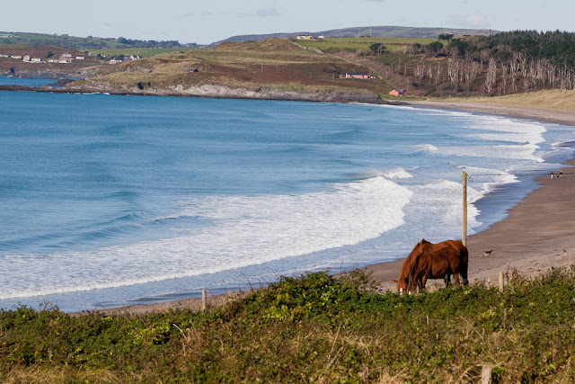 Irish landscape: horses at the seashore  - county Cork