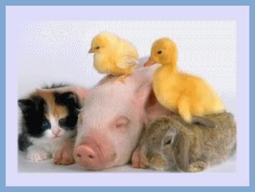 tarjetas de animales bonitos