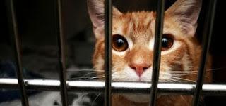 Felines Abandoned