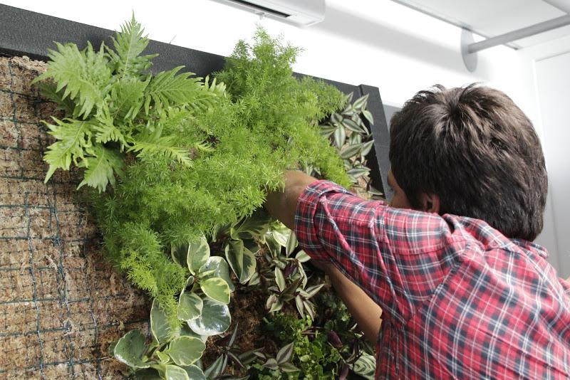 Curso intensivo de jardines verticales espacios vivos - Como hacer jardines verticales ...