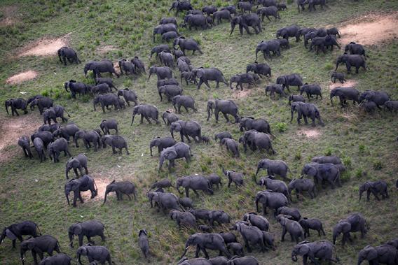 Elephants in Amboseli National Park