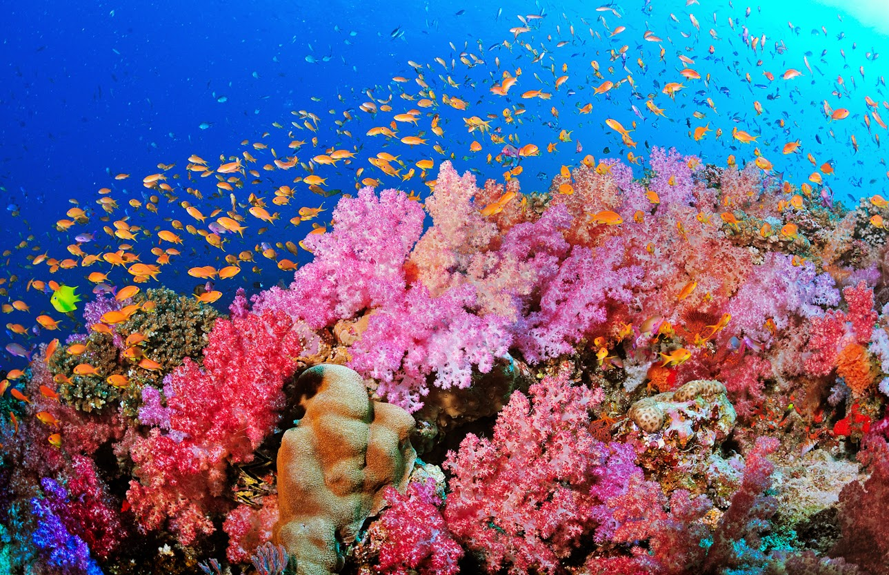 Pics For > Top 10 Most Beautiful Coral Reefs 10 Most Beautiful Coral Reefs World
