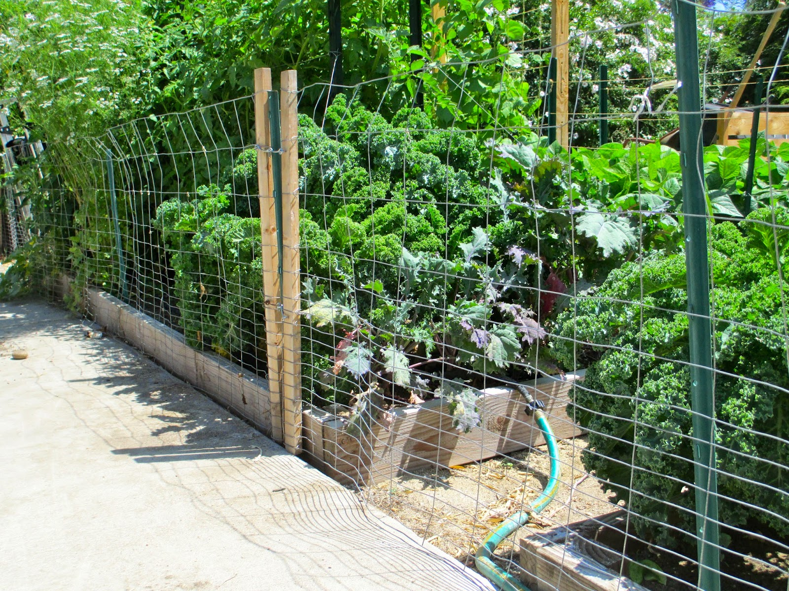 Ordinaire Fence And Simple Gates   Removes Easily For Gardening   Andieu0027s Way