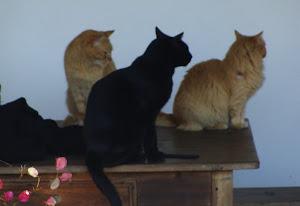 Os gatos