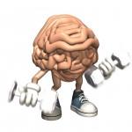 är hjärnan en muskel