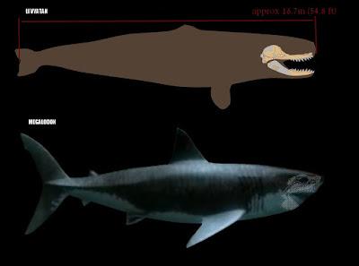 Tamaño Livyatan Melvillei vs Megalodon