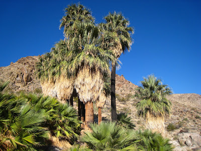 49 Fortynine Palms Oasis Joshua Tree National Park