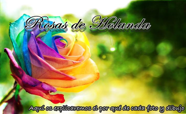Rosas de Holanda