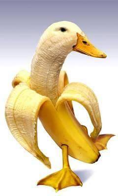 Banana with Swan for you