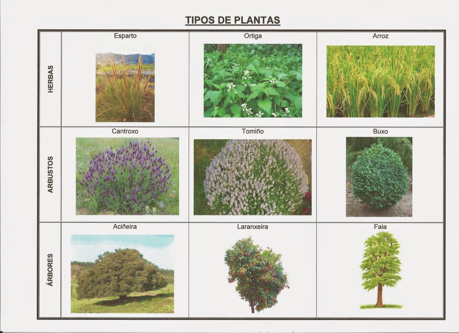 Cousi As Do Segundo Ciclo Tipos De Follas E Plantas