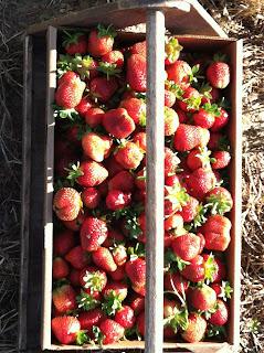 fresh picked, farm, garden