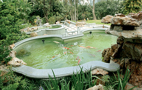 Best fish ponds for Popular pond fish