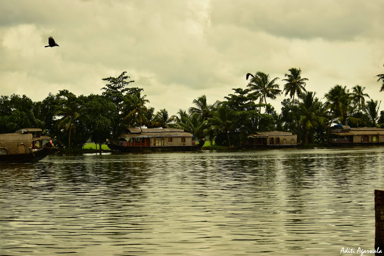 The houseboats in the backwaters of Allepey
