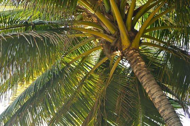 La Tortuga Verde property El Salvador