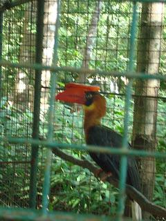 bird in the cage in Zoobic Safari