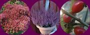 Sussokai.blogspot.com