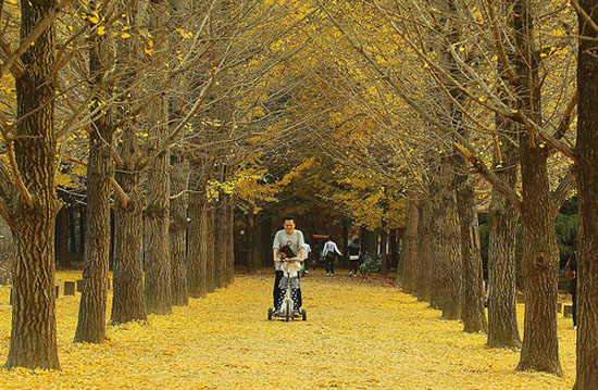 Nami Island