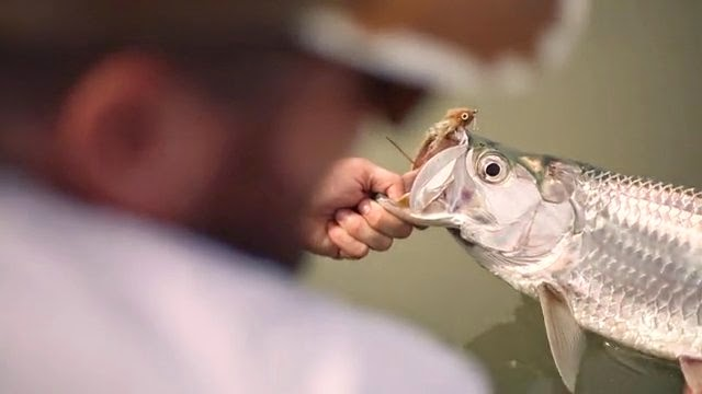 pêche baby tarpon