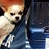 Έκπληξη! Σκύλος ''τρύπωσε'' στη βαλίτσα...