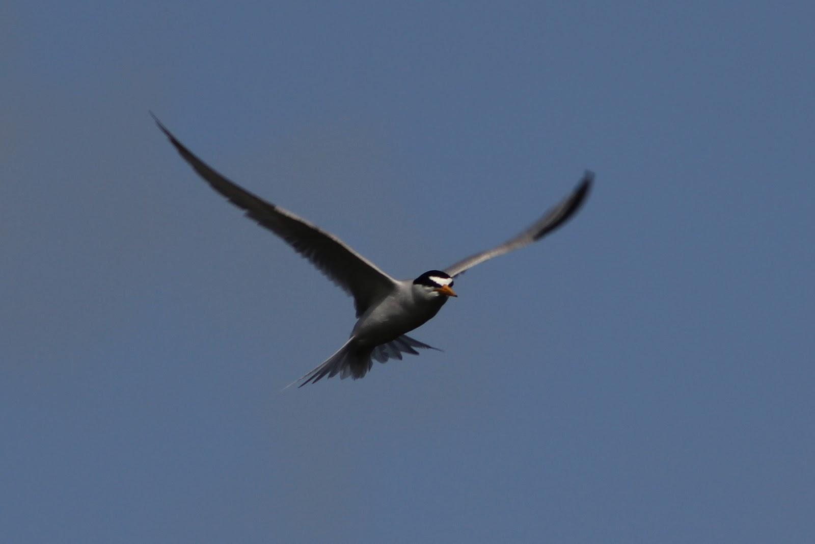 hipster birders june 2012