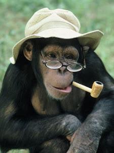 Indiana Monkey: