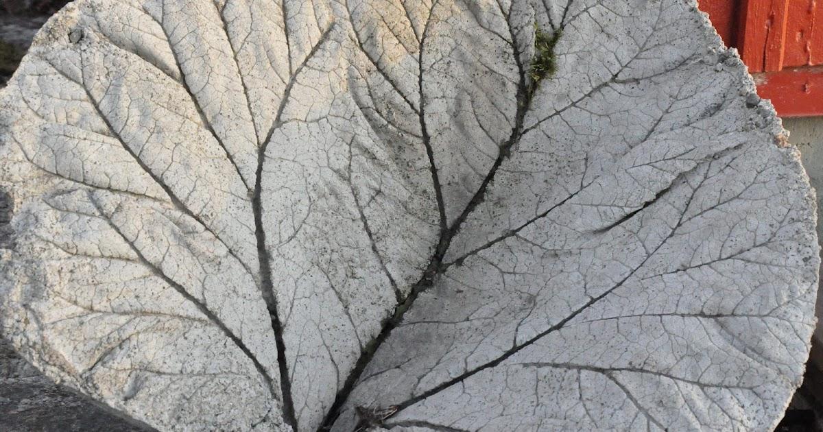 gjuta i betong rabarberblad