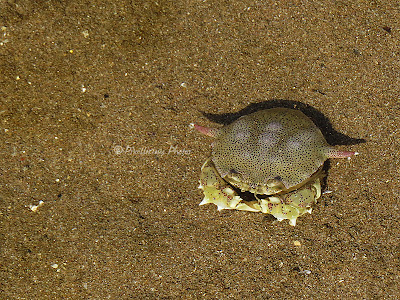 A crab at Aksa beach