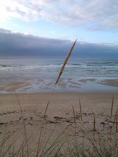 Feliz lluvioso Martes,....y como dicen por ahí, al mal tiempo buena cara, aqui en A Bicharela le sacamos el lado dulce a un dia gris.