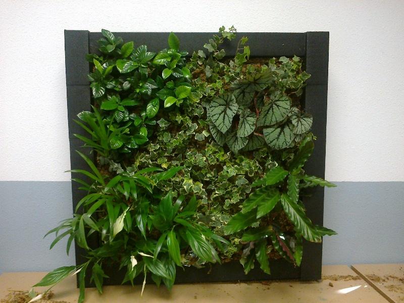 curso jardines verticales madrid jardines verticales y