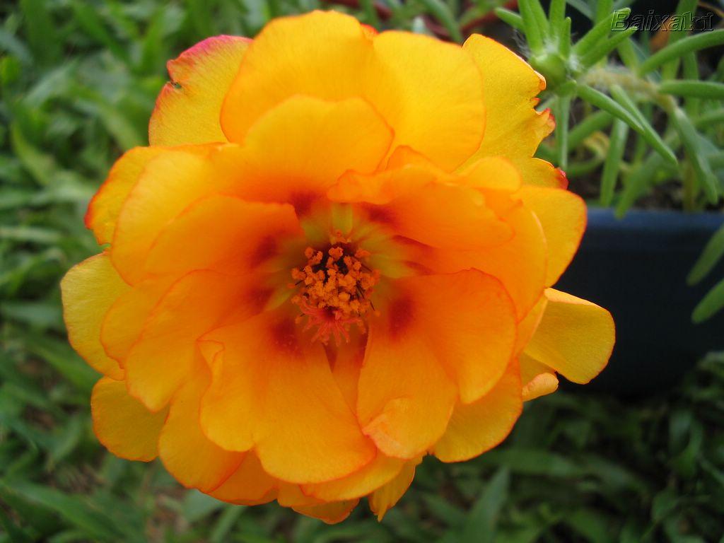 HIPERSESSÃO  As Flores OnzeHoras