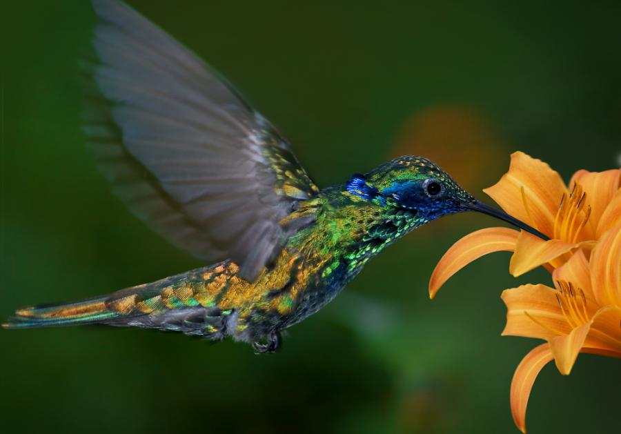 Curiosidades sobre las aves