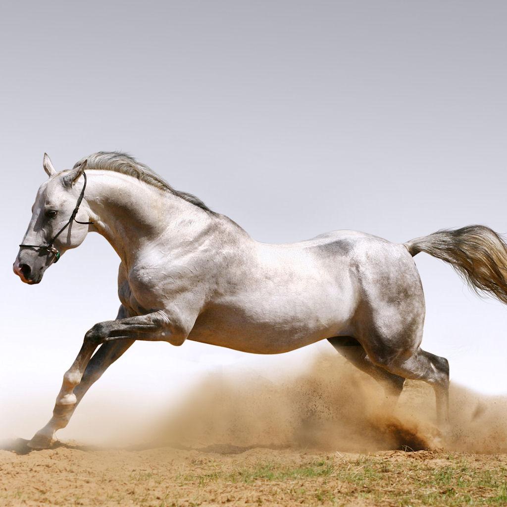 http://2.bp.blogspot.com/-lBOMg-gXbgs/TYDt3ZIm_uI/AAAAAAAAZug/-U3NBUwwkEo/s1600/www.W4TS.org+-+Wallpapers+for+iPad+and+iPad2+-+Beautiful+horses+10.jpg