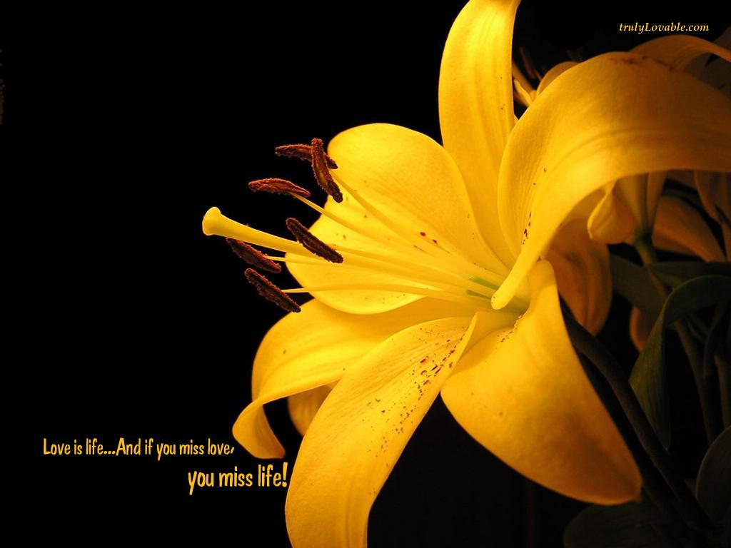 http://2.bp.blogspot.com/-lBRg3MX1yK4/TfG88nxQlWI/AAAAAAAABWM/_OBqJ1r1BNY/s1600/if_you_miss_love-7193.jpg