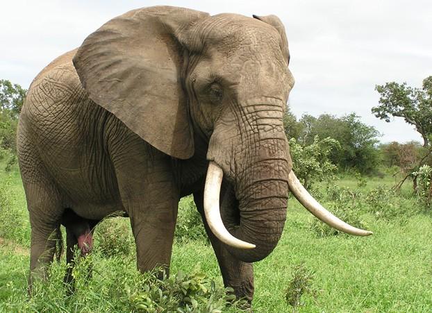 Http Stockphototops Blogspot Com 2013 04 Elephant Free Stock Photos Html