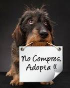 Por favor NO compres uno de raza, mejor adopta uno sin casa!