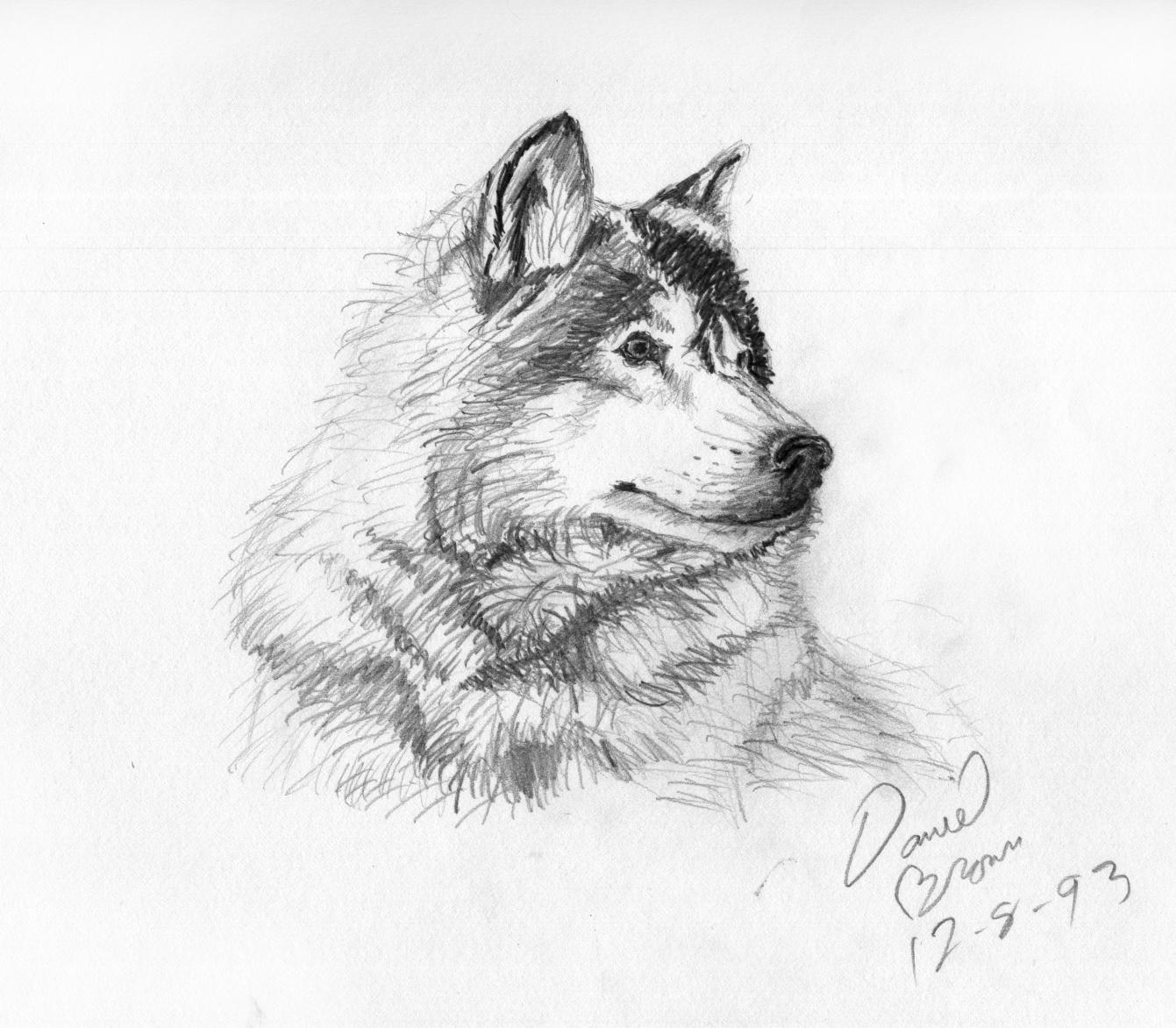 Животные рисунки в карандаше 3