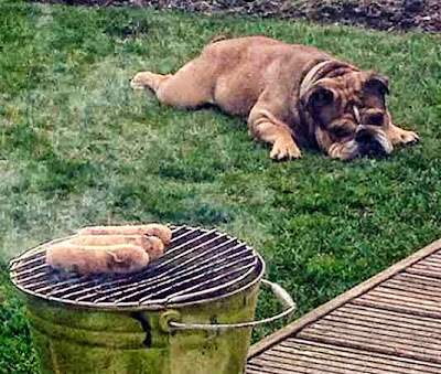 dog waiting for sausages to cook