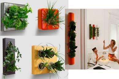 Jardines verticales monterrey mayo 2012 for Jardin vertical de fieltro en formato kit