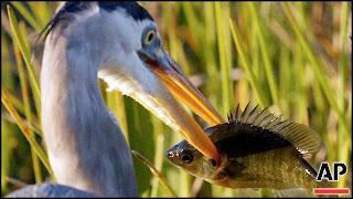 wildlife concerns