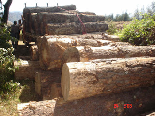 madera-ilegal