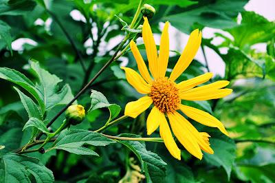 Flor silvestre amarilla