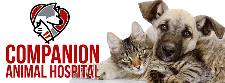 Companion Animal Hospital Blog